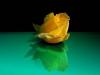 lxf63-rose-2.jpg